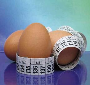اندازه تخم مرغ