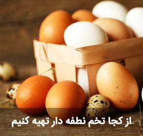 تخم نطفه دار مناسب جوجه کشی مرغ