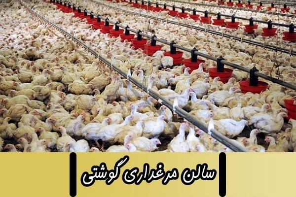 سالن مرغداری گوشتی