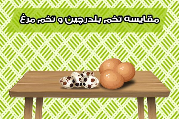 مقایسه تخم بلدرچین و تخم مرغ