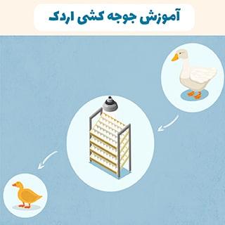آموزش جوجه کشی اردک