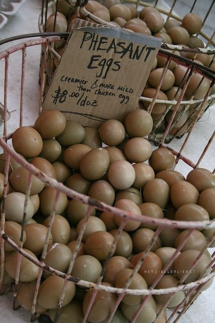 تخم مناسب جوجه کشی قرقاول