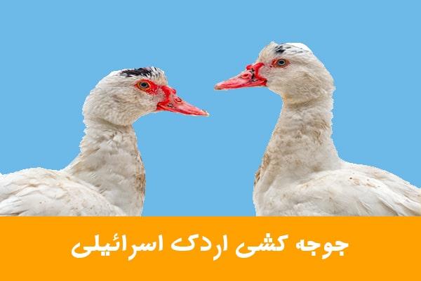 جوجه کشی اردک اسرائیلی