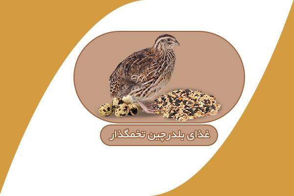 غذای بلدرچین تخمگذار