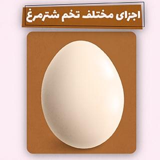 تخم شترمرغ و هر آنچه درباره ی اجزای آن باید بدانید