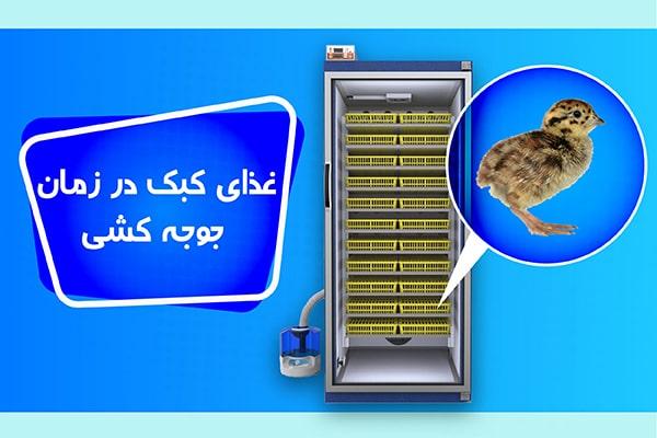 غذای کبک در زمان جوجه کشی