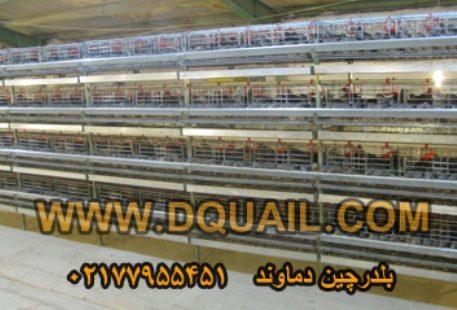 quail cage m1m_dd78a755_l