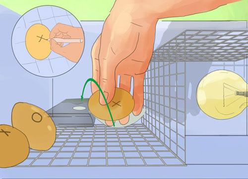 چرخش تخم مرغ