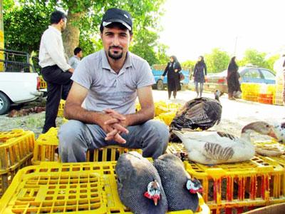 خرید تخم نطفه دار از بازار محلی