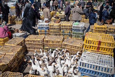 بازار تخم نطفه دار پرندگان