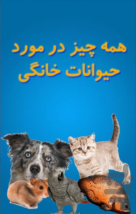 همه چیز برای حیوانات خانگی