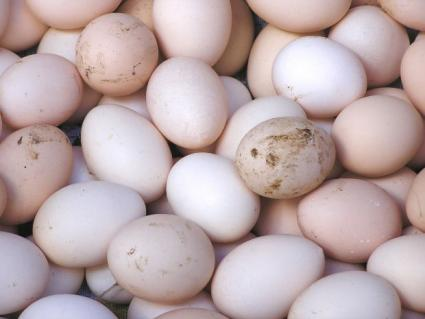 تخم مرغ کثیف