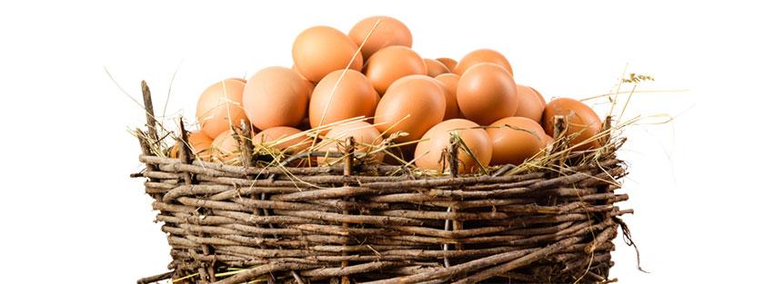 از کجا تخم نطفه دار برای جوجه کشی تهیه کنیم؟