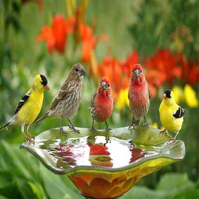 سایر پرندگان
