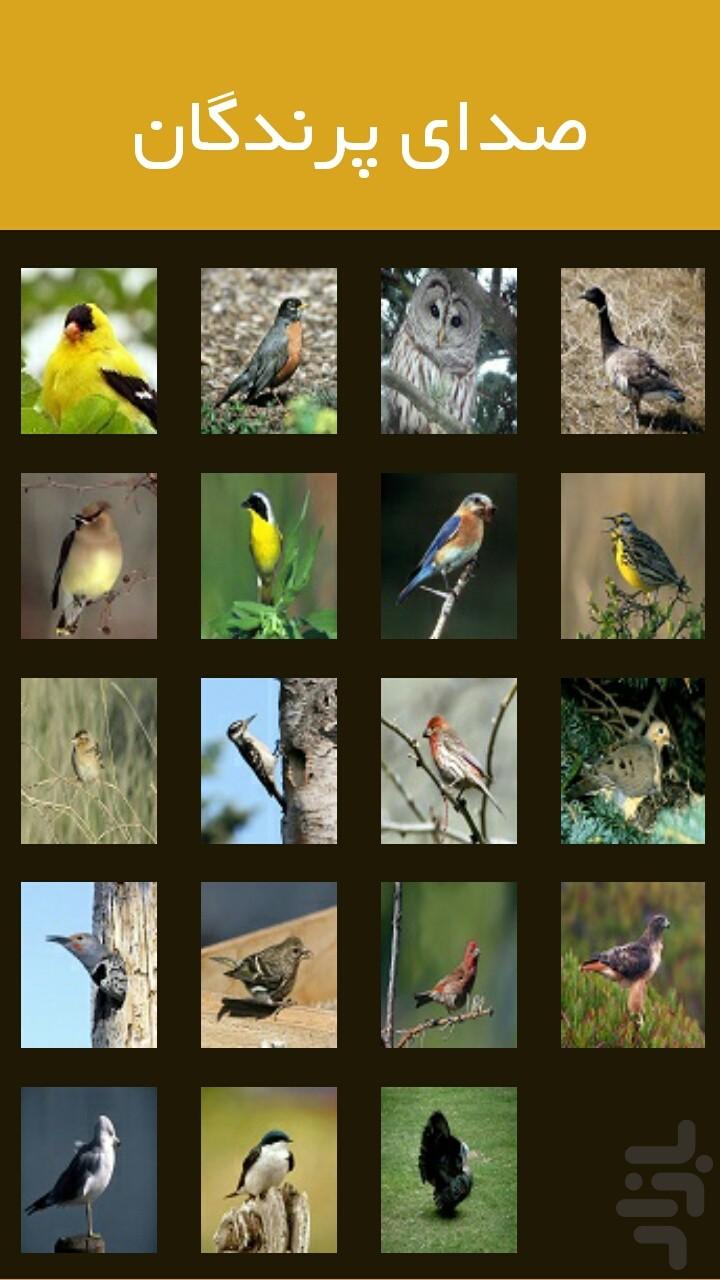 صدای پرندگان