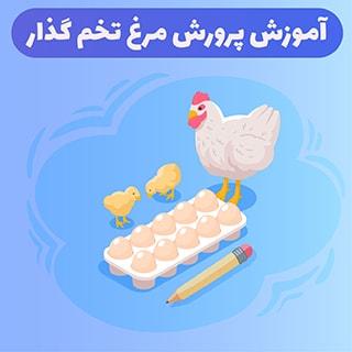 روش های پرورش مرغ تخمگذار در ایران را یاد بگیرید و اجرا کنید