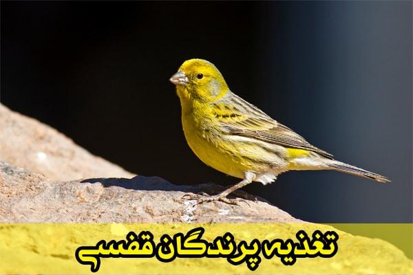 تغذیه پرندگان قفسی