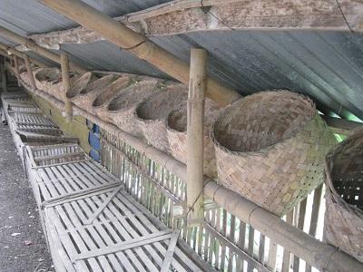 لانه پرورش مرغ بومی