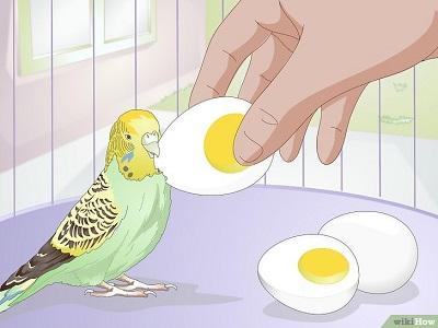 پروتئین غذای مرغ عشق