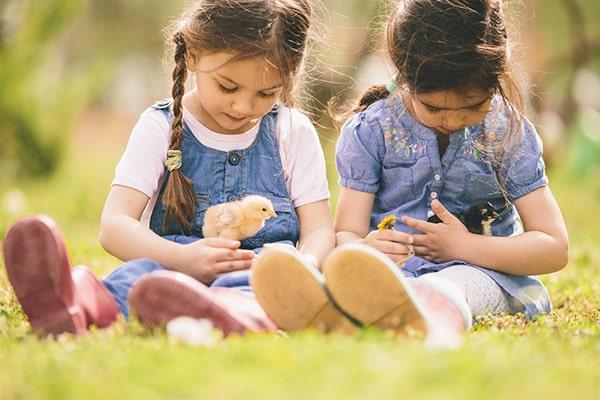 علاقه کودکان به دستگاه جوجه کشی خانگی