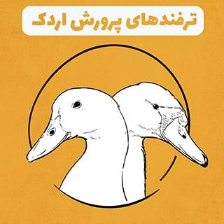 ترفندهای پرورش اردک در خانه و مزرعه به عنوان شغلی پر سود