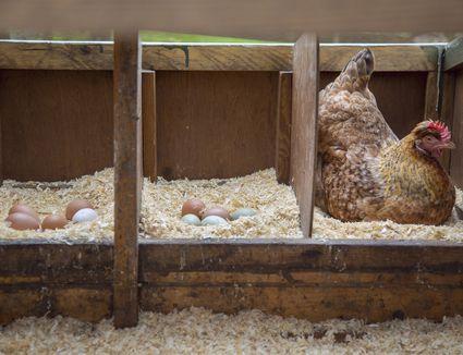 مکان مناسب تخم گذاری