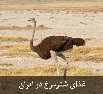 غذای شترمرغ در ایران