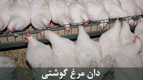 دان مرغ گوشتی