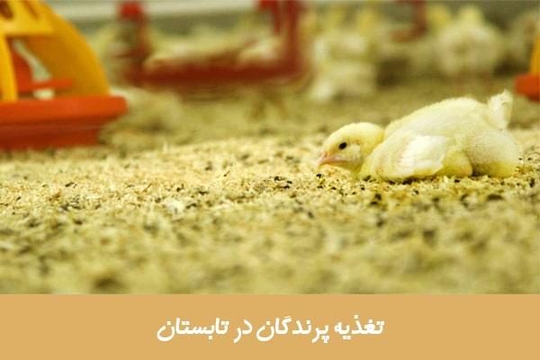 تغذیه پرندگان در تابستان
