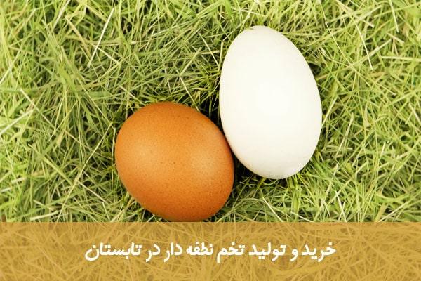 تولید تخم نطفه دار در تابستان