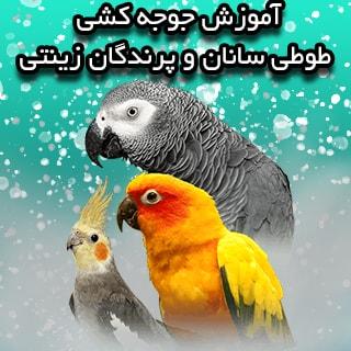 آموزش جوجه کشی طوطی سانان