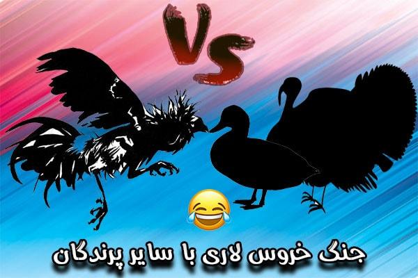 جنگ خروس لاری با سایر پرندگان
