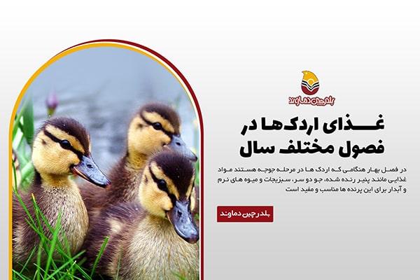 غذای اردک در فصول مختلف سال