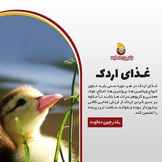 غذای اردک