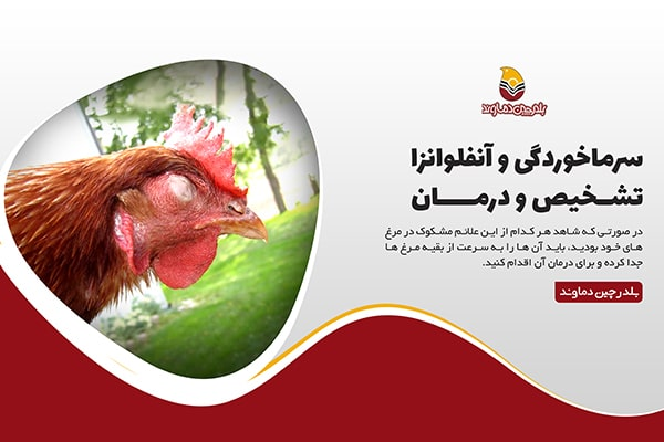 آنفبوانزای مرغی